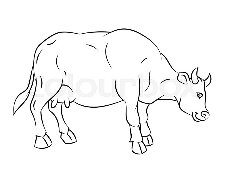 800x599 Hand Drawn Sketch Of Cow Isolated, Black And White Cartoon Vector