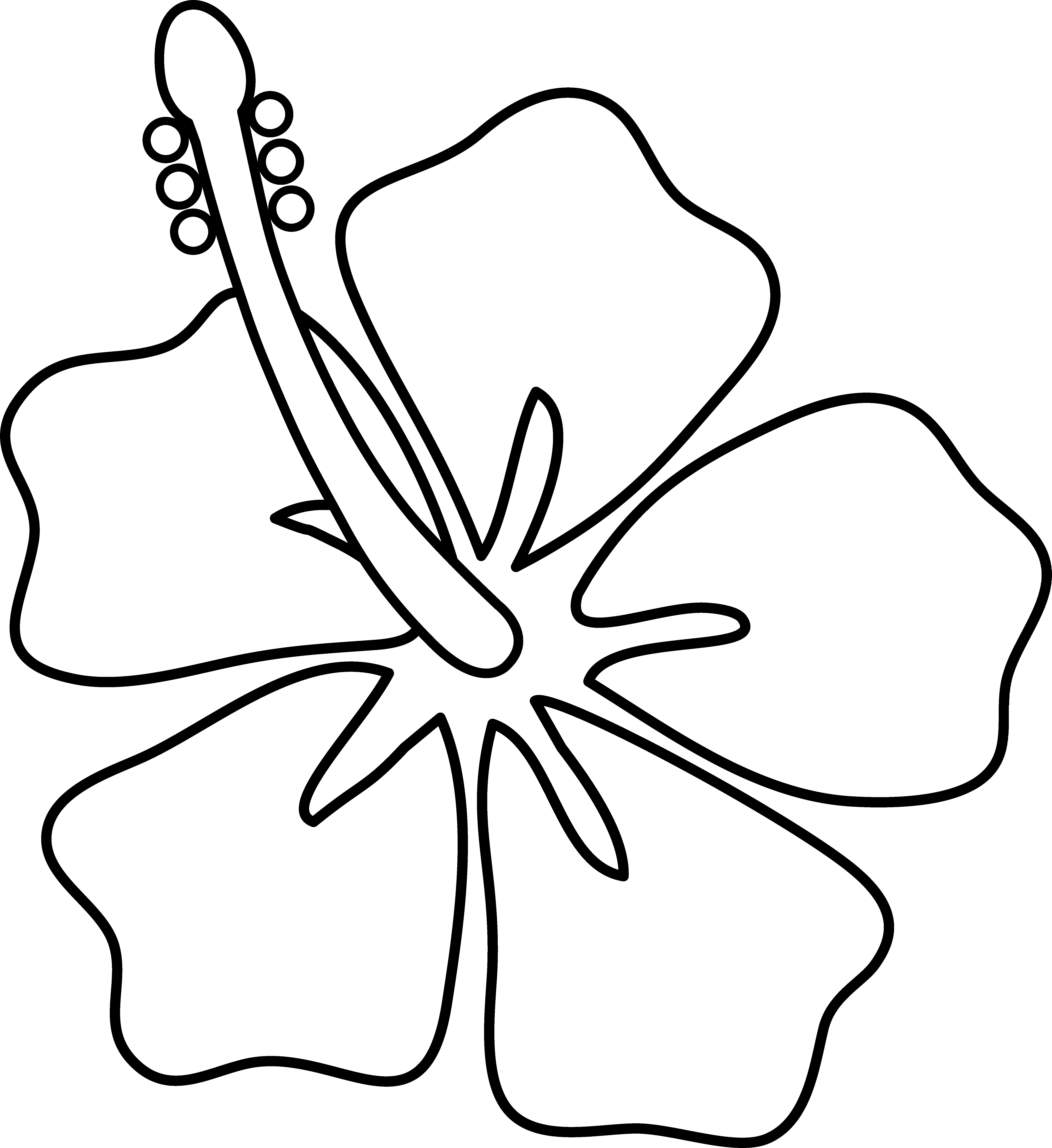 Cartoon Drawing Of Flowers At Getdrawings Free For Personal