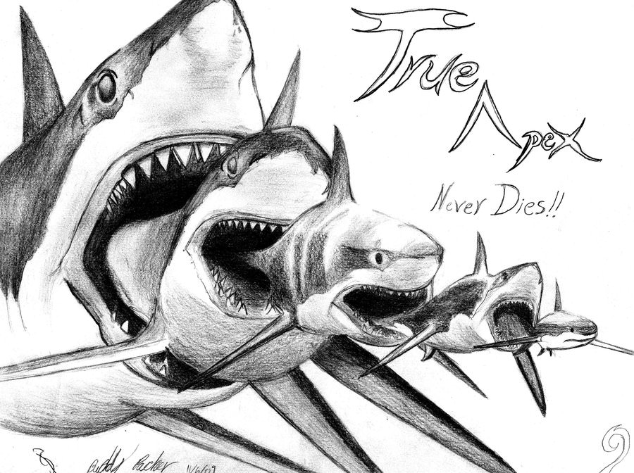Cartoon Drawing Of Shark