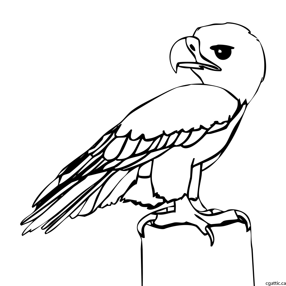 1000x1000 Eagle Cartoon Drawing In 4 Steps With Photoshop