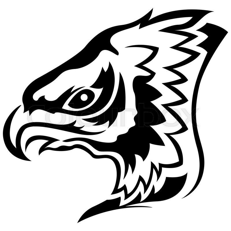 800x800 Head Of Menacing Eagle, Side View Cartoon Outline Stock Photo
