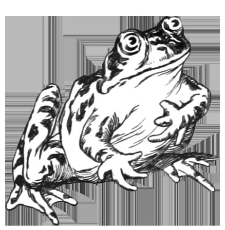 462x472 Frog Clip Art