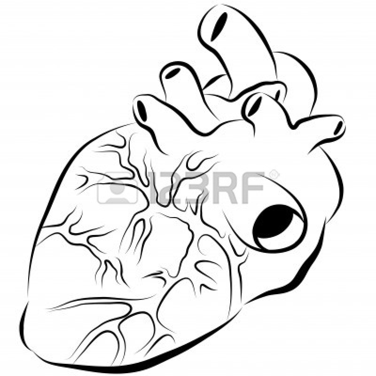 1200x1200 An Image Of A Human Heart Ink Paintings Human