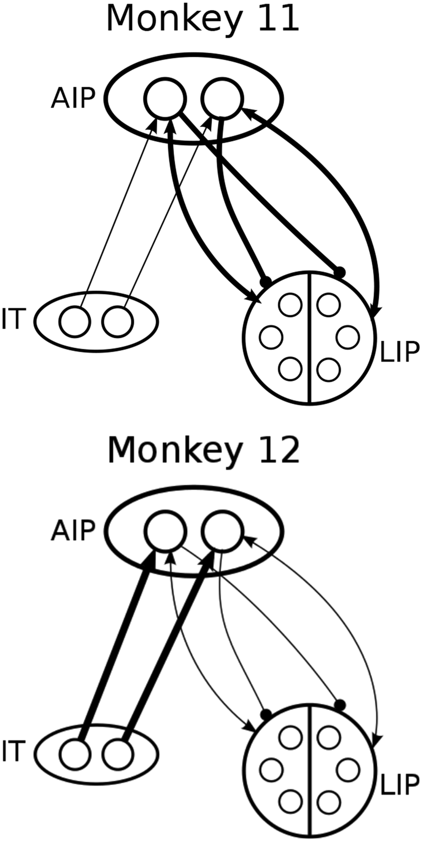 850x1690 Network Cartoon Illustrating Fitted Connection Weights Among It