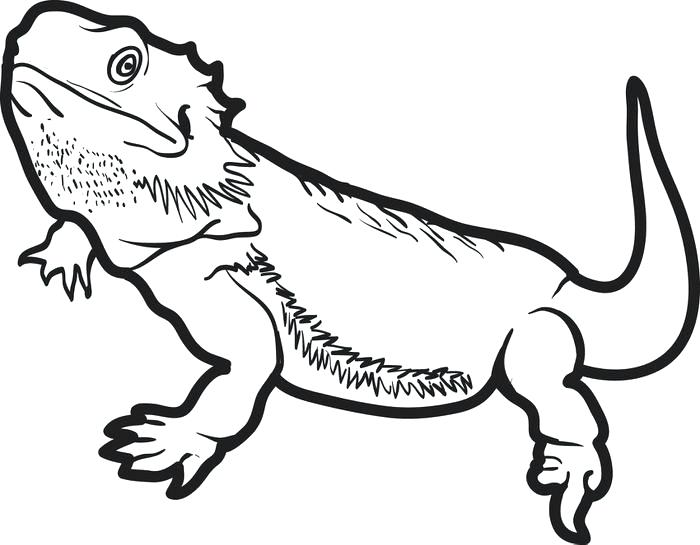 700x545 Lizard Coloring Page