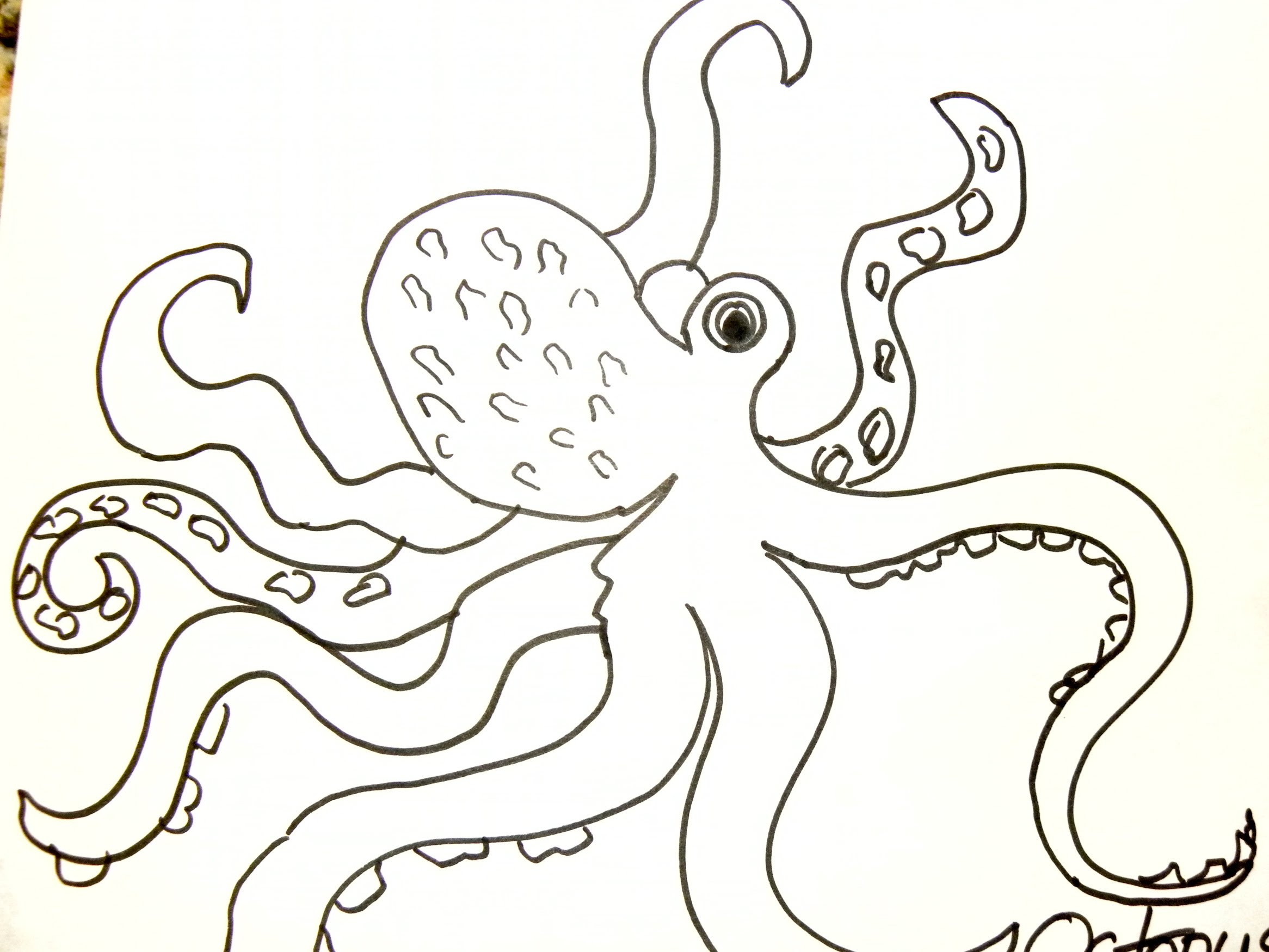 2332x1749 Kids Can Draw Octopus