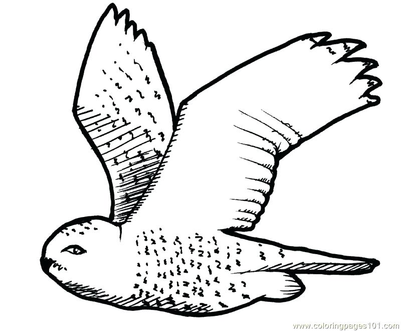 800x659 Free Owl Coloring Pages Page Of Medium Size