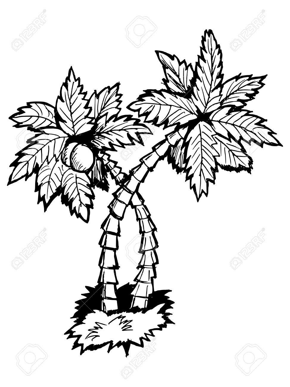 974x1300 Palm Tree Cartoon Drawing Hand Drawn, Vector, Cartoon Illustration