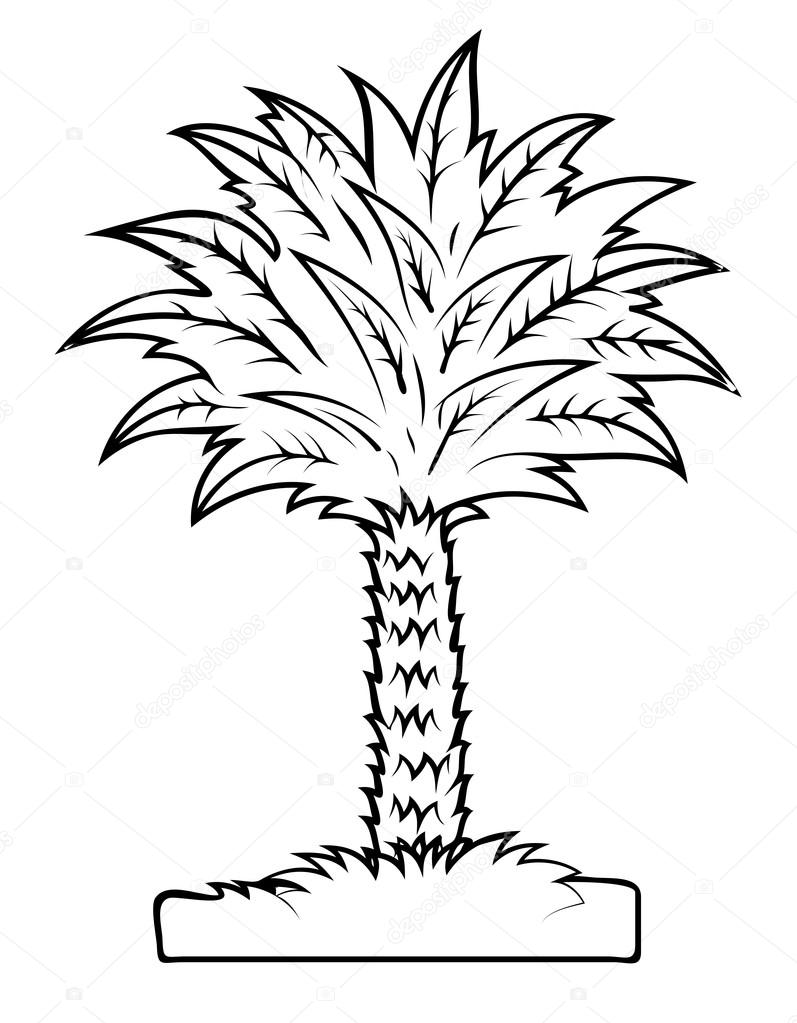797x1023 Vector Drawing Of Palm Tree Stock Vector Baavli