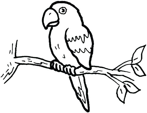 600x461 Parrot Coloring Page Parrot Coloring Pages 6 Cartoon Parrot