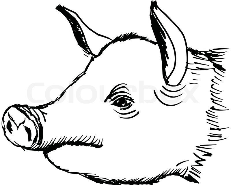 800x643 Hand Drawn, Sketch, Cartoon Illustration Of Pig Stock Vector