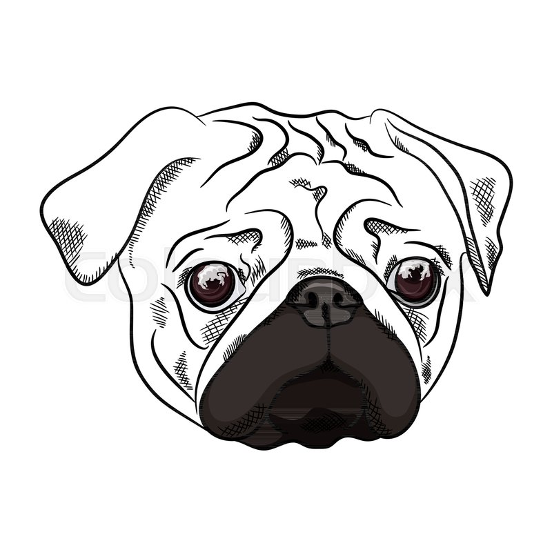 Cartoon Pug Drawing at GetDrawings | Free download