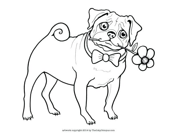 pug animal coloring pages. 620x479 Pugs Coloring Pages Pug Page Cartoon Drawing at GetDrawings com  Free for personal use