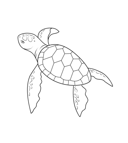 432x480 Baby Turtle Coloring Page From Turtles Category. Select From 20946