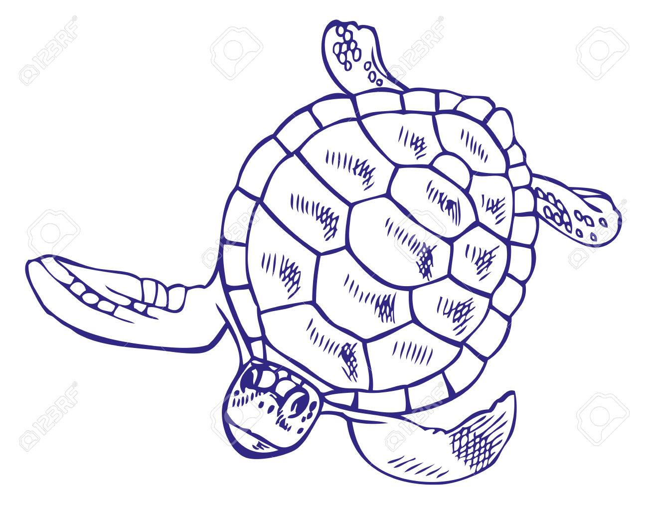 1300x1013 Hand Drawing On A White Background Sea Turtle Royalty Free