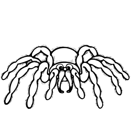 456x480 Cartoon Spider Coloring Page Free Printable Coloring Pages