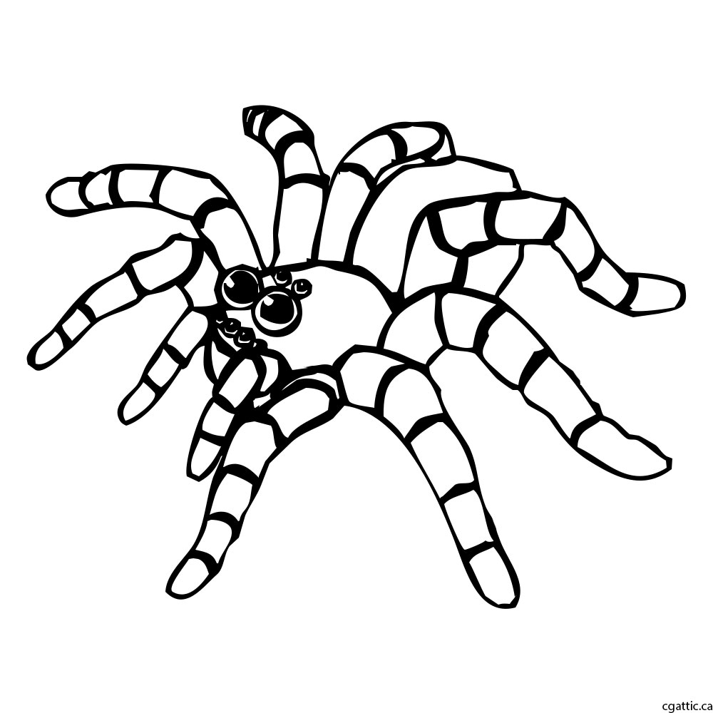 1000x1000 Cartoon Spider Drawing Spider Cartoon Drawing In Photoshop
