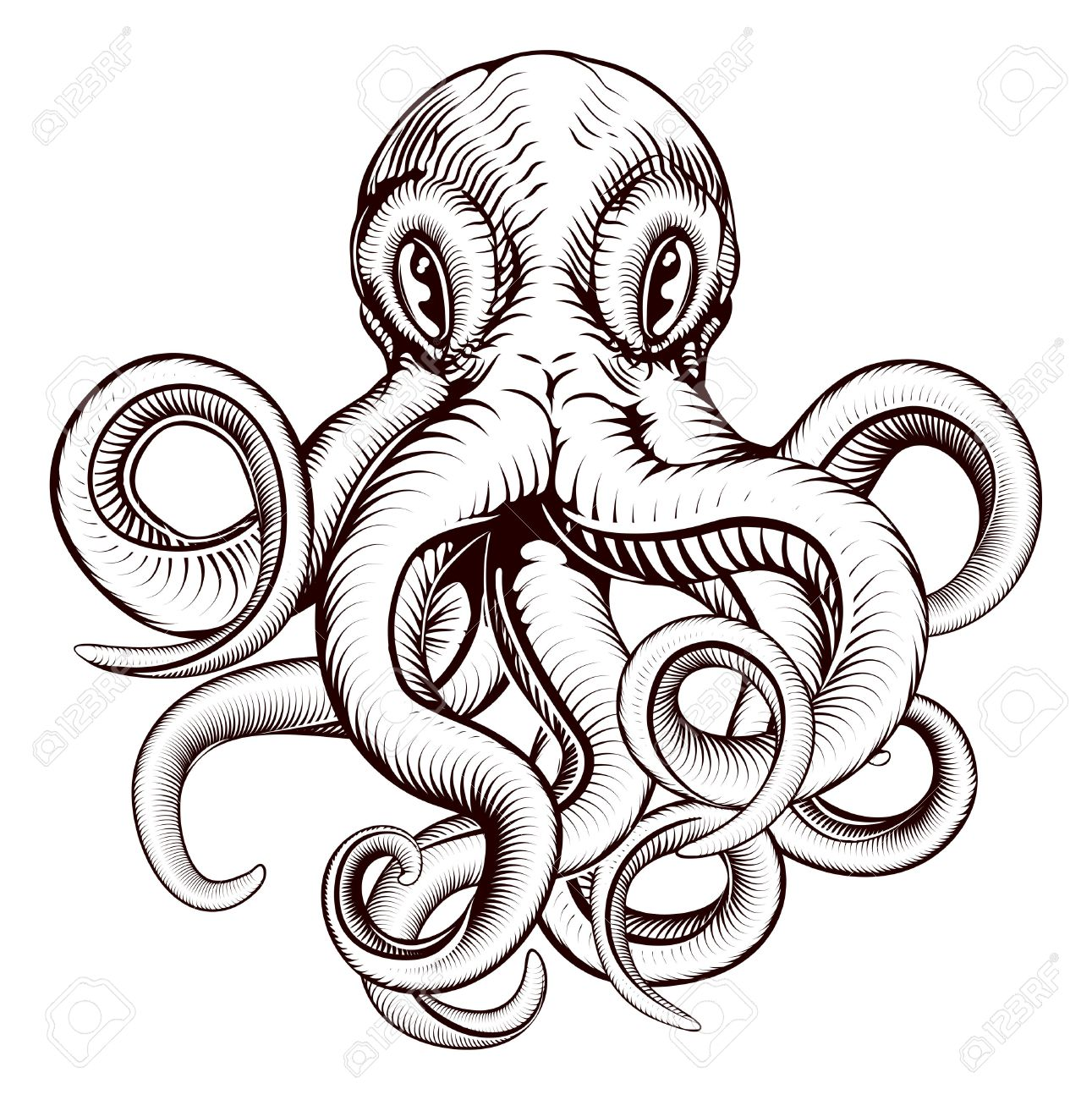 Cartoon Squid Drawing