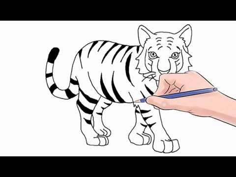 480x360 How To Draw A Tiger Easy Step By Step