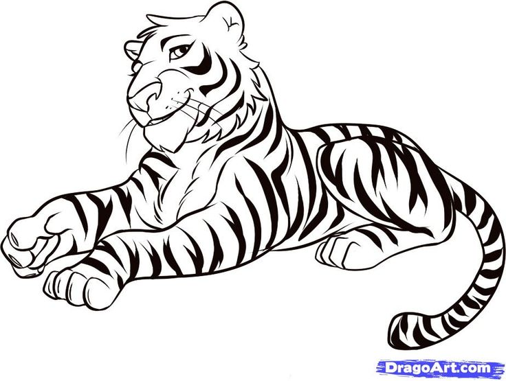 736x555 The Best Easy Tiger Drawing Ideas On Rabbit