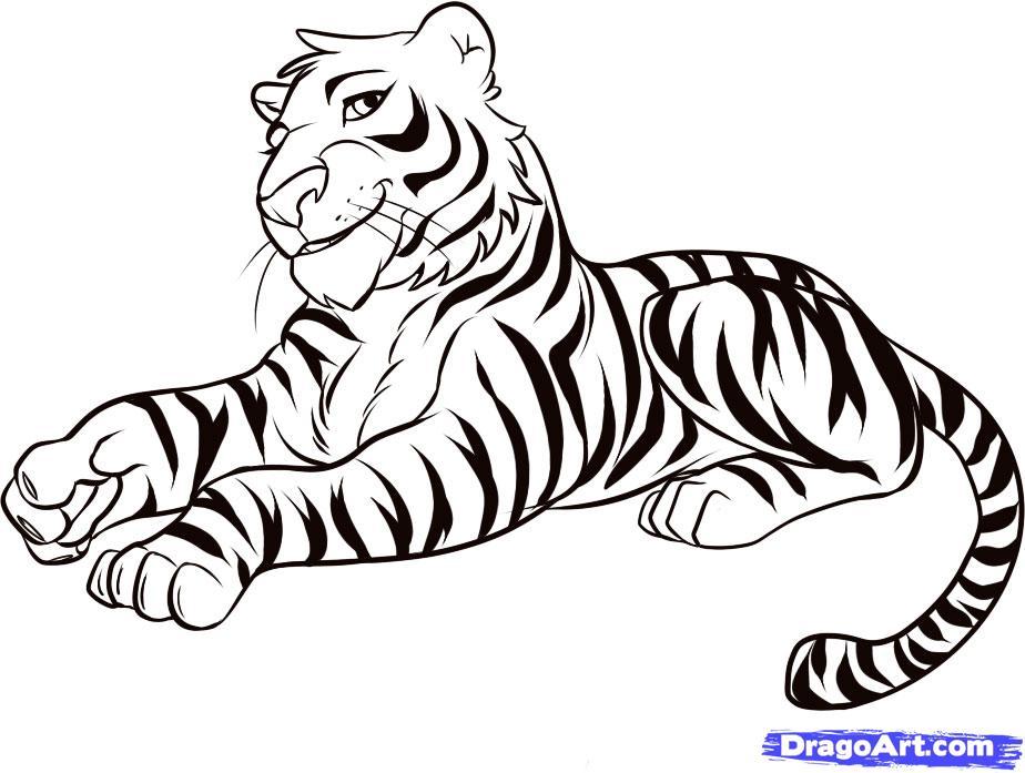 924x697 Female Tiger Drawing