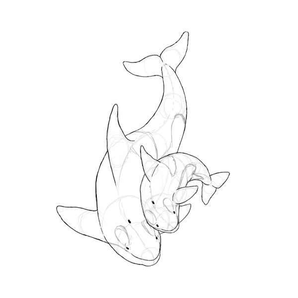 600x600 How To Draw Animals Dolphins, Whales And Porpoises