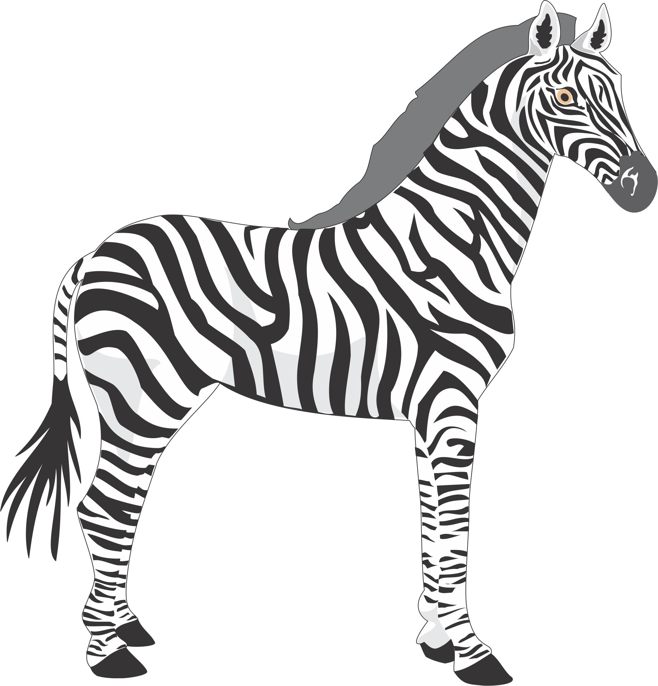 2221x2314 Baby Zebras