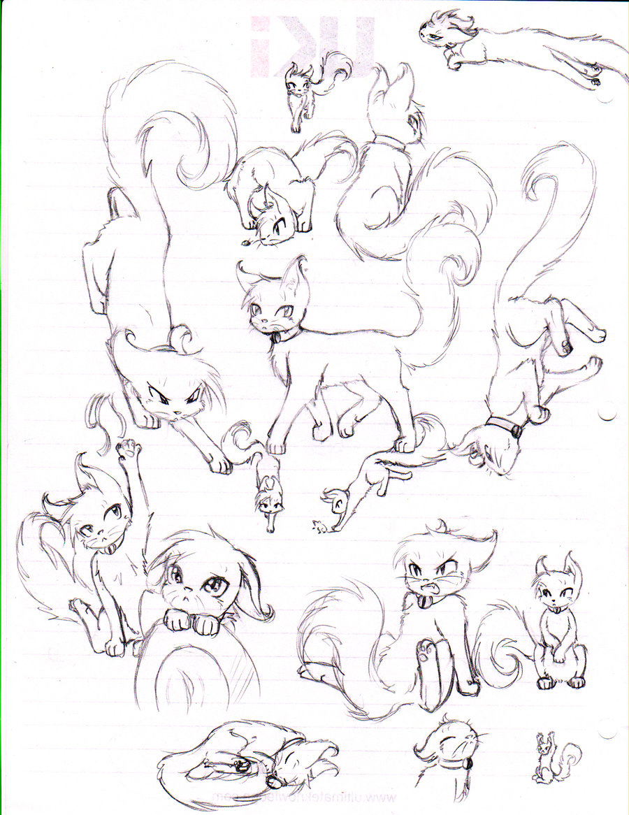 900x1166 Cat Anatomy Drawing Drawn Feline Anatomy