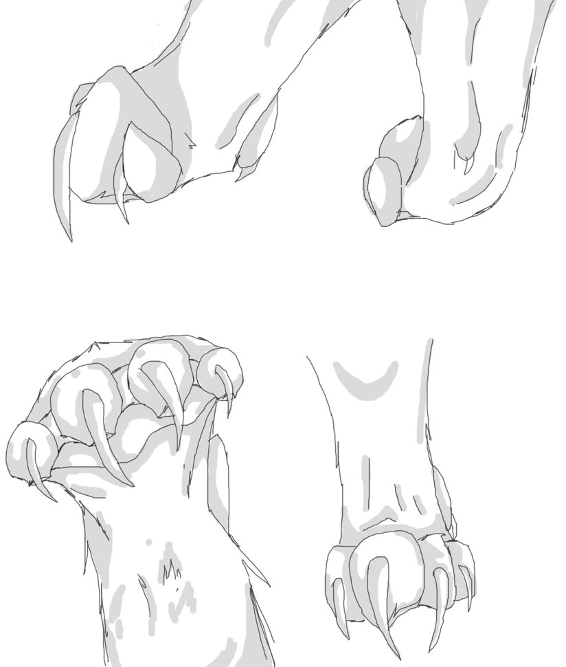 824x970 Cat Paw Overviewanatomy Practice By Avenryn