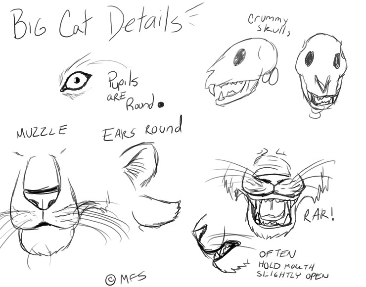 740x580 Cat Tutorial Big Cat Details By Modesty