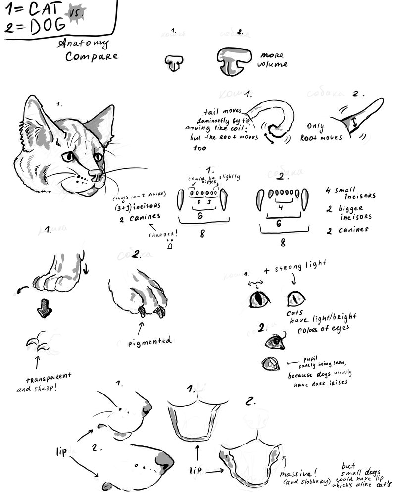 802x996 Cat Vs. Dog Anatomy Compare By Clotus