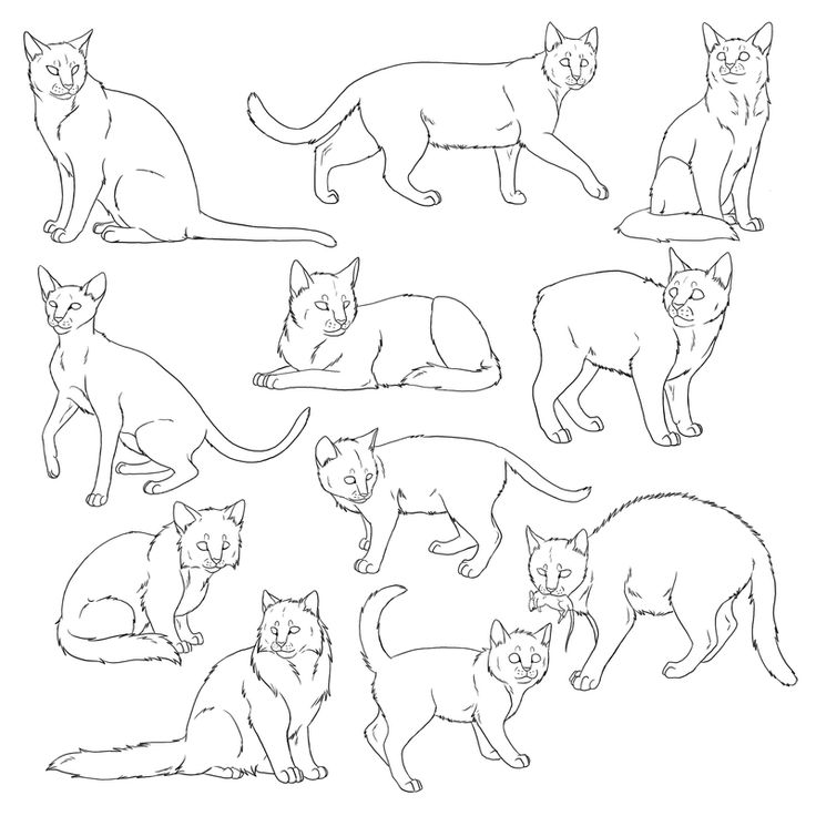 736x736 472 Best Felines Images On Drawing Reference, Drawing
