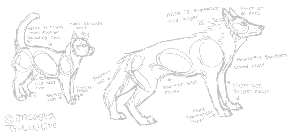 1024x478 The Difference Between Wolf And Cat Anatomy By Homeqrown