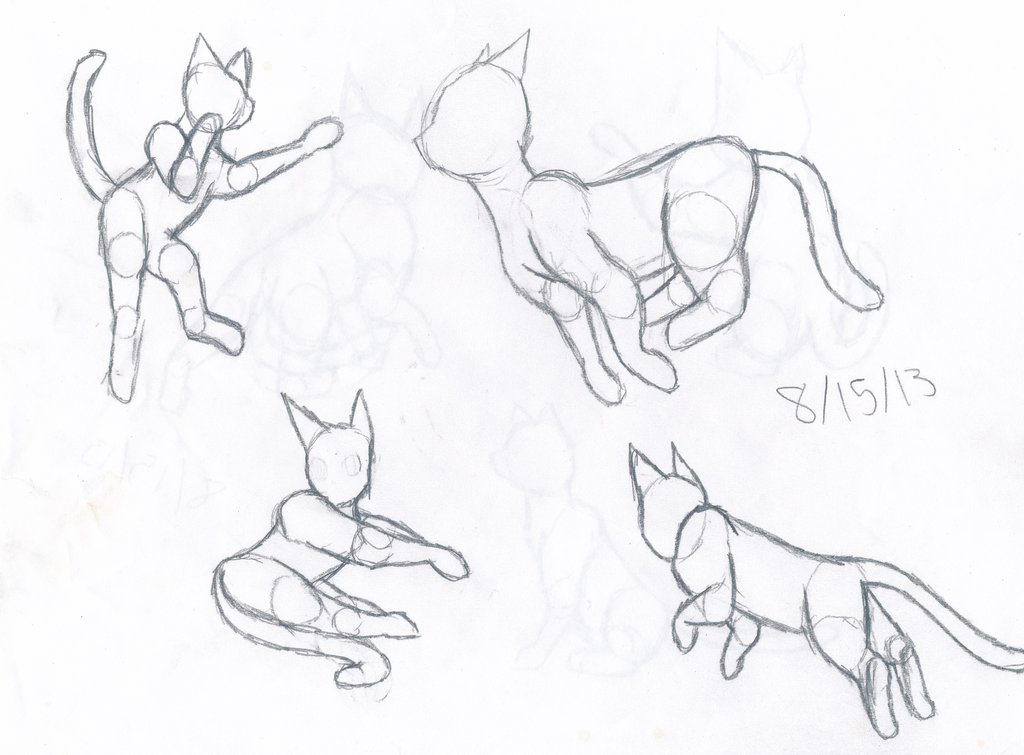 1024x755 Cat Anatomy Practice 1 By Thelongdreamer