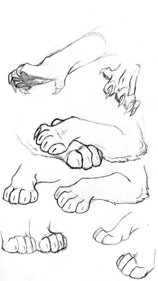 672x1190 Anatomy Practice Big Cat Paws By Kannibalethevicious