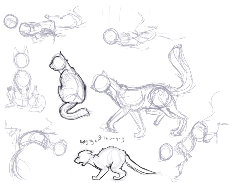 cat anatomy for drawing at getdrawings com