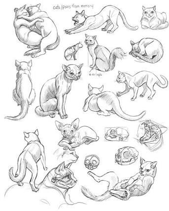 343x429 Cat References (Anatomy + General Structure) Animation Art + Map