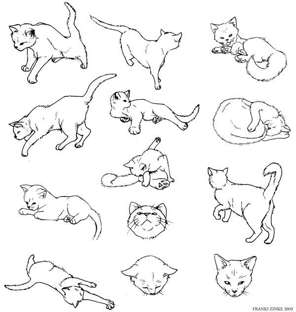 600x632 Cat Study By Frankizinke