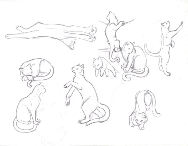 600x465 Cat Study Sketches Part 1 By Sapphire Blackrose