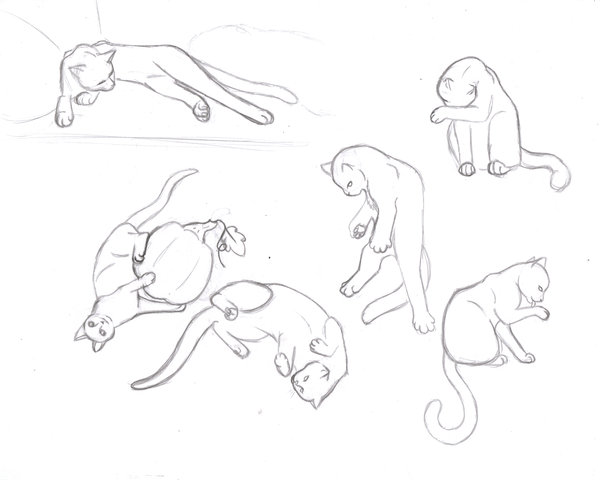 600x480 Cat Study Sketches Part 2 By Sapphire Blackrose