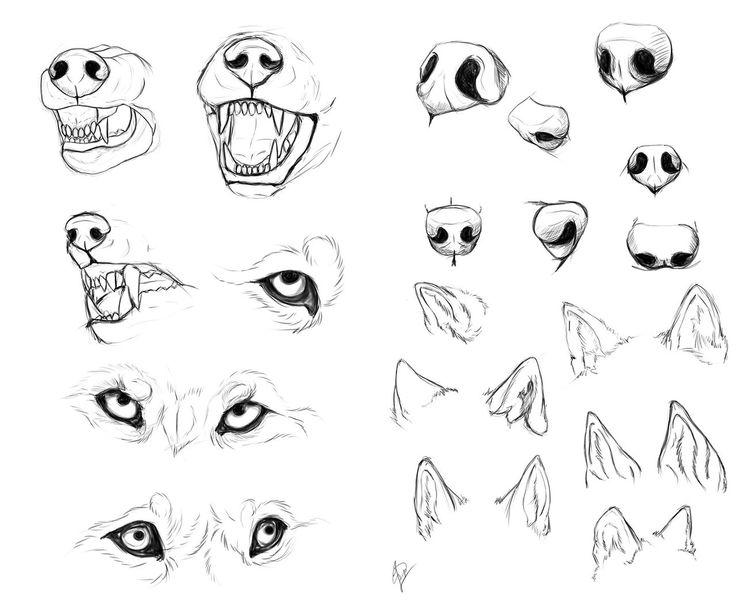 736x612 Dog Anatomy Drawing