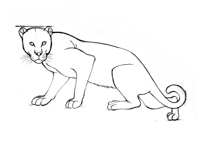 653x490 How To Draw Leopards 11 Steps (With Pictures)