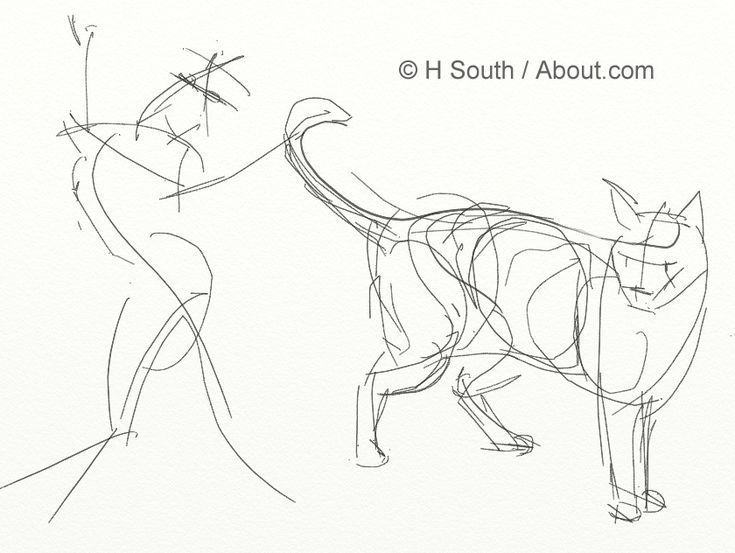 735x553 Your Guide To Drawing Sketching Cats Contours, Draw Lips