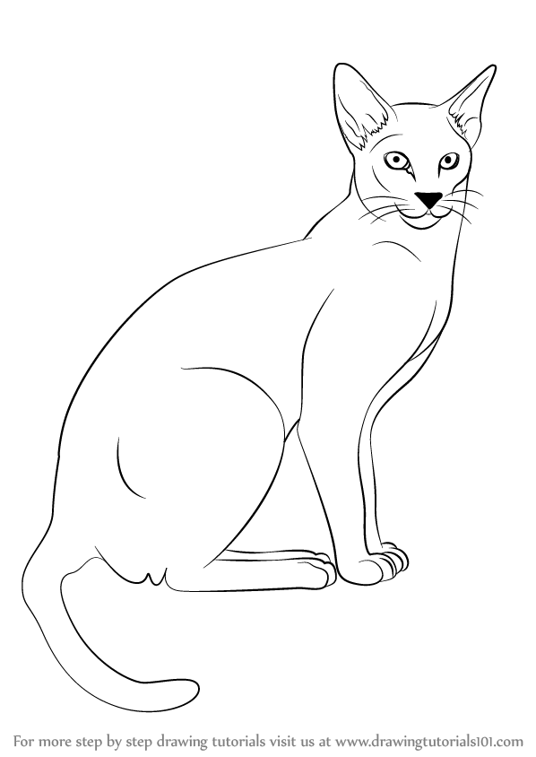 598x844 Learn How To Draw A Siamese Cat (Cats) Step By Step Drawing