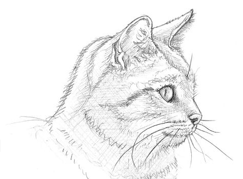 474x349 Very Nice! Animals Nice, Cat And Drawings