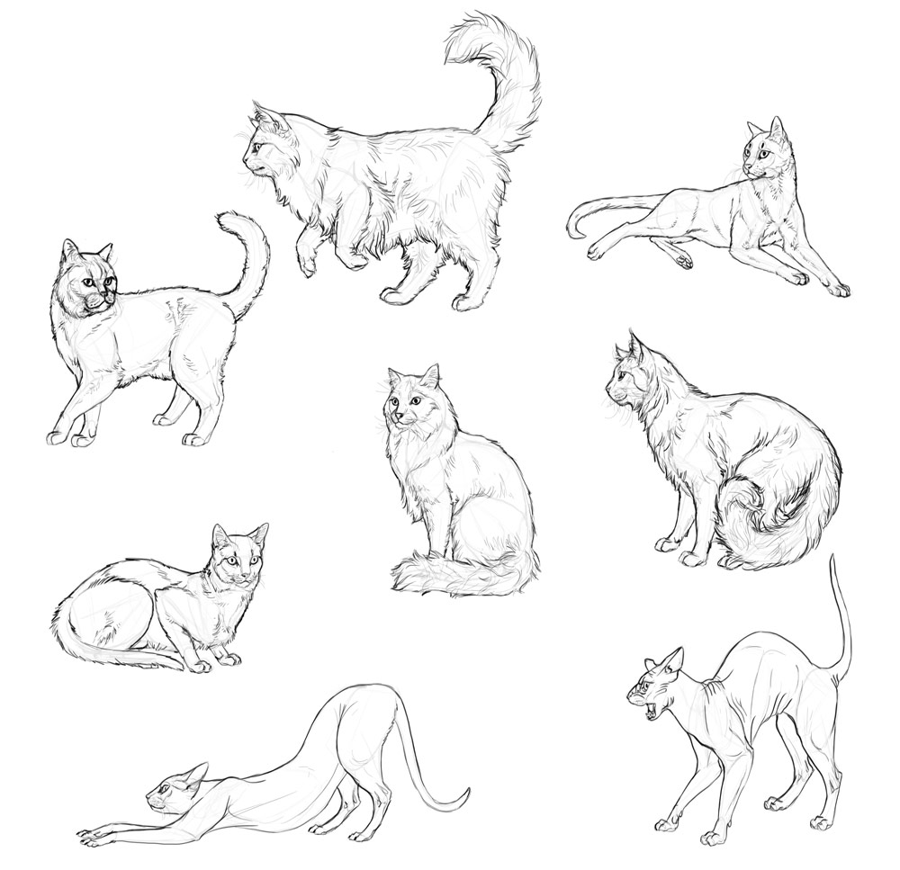 1000x967 How to Draw Cats Step by Step with Monika Zagrobelna