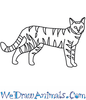 300x350 How to Draw a Wildcat