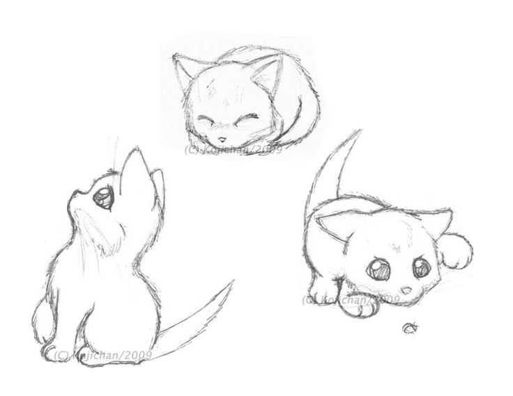 736x569 Drawn Kitten Adorable Cat