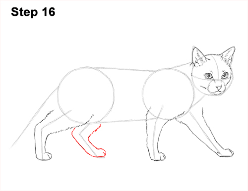 500x386 How To Draw A Siamese Cat