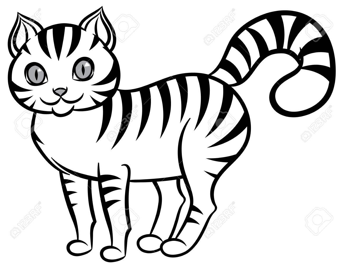 1300x1022 Isolated Black And White Stripped Cat